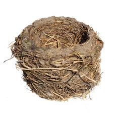 Free Bird Nest, Isolated Royalty Free Stock Image - 19601116