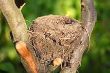 Free Bird Nest In Wild Royalty Free Stock Photos - 19601158