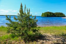 Free Pine Tree Over A Lake Royalty Free Stock Image - 19602586
