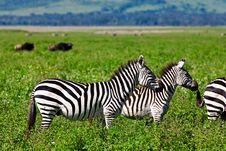 Free Zebras In The Serengeti Stock Photography - 19602642
