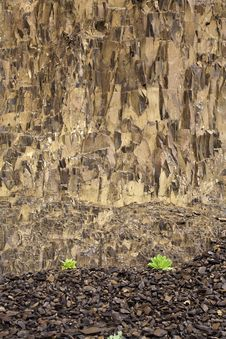Free Small Plants And Large Rock Wall. Royalty Free Stock Image - 19604576