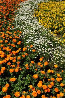 Free Beautiful Flowers Stock Photo - 19604720