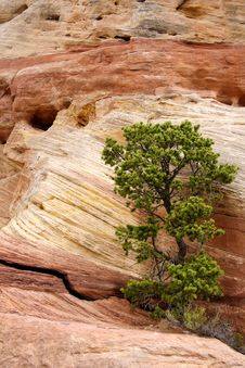 Free Tree Among Red Rocks Stock Photos - 19604813