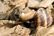 Free Kissing Snails Royalty Free Stock Image - 19604916