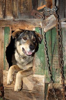 Free The Benevolent Dog Royalty Free Stock Photo - 19605025