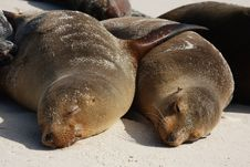 Free Lazy Sea Lions Royalty Free Stock Image - 19605666