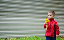 Free The Boy With Dandelions Royalty Free Stock Photography - 19605937