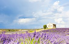 Free Lavender Field, Provence Stock Photography - 19607802