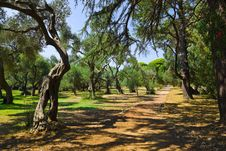 Pathway In Park At Croatia Stock Images