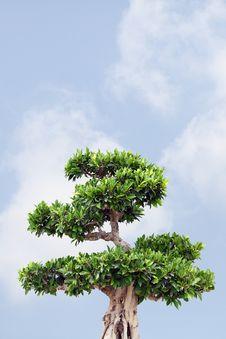 Free Tree And Sky Royalty Free Stock Photo - 19607955
