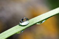 Free Water Drops On The Green Grass Stock Photo - 19608940