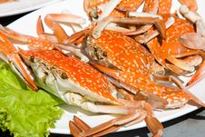 Free Red Crab Stock Photos - 19609793