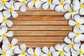 Free Plumeria Flower Frame Stock Photos - 19612503