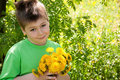 Free A Boy With A  Dandelions Royalty Free Stock Image - 19612676