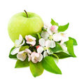Free Apple And Flower Blossom Stock Images - 19617064