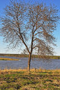 Free Tree At Riverbank Stock Photography - 19618962