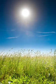 Free Green Grass Under Blue Bright Sky Stock Photo - 19610210