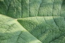 Free Leaf Structure Royalty Free Stock Photos - 19611328