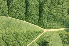 Free Leaf Structure 2 Royalty Free Stock Image - 19611346