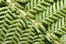 Free Fern Structure 2 Royalty Free Stock Image - 19611476