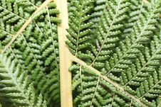 Free Fern Structure 1 Royalty Free Stock Images - 19611499