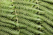 Free Fern Structure 3 Royalty Free Stock Images - 19611519