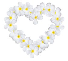 Free Plumeria Flowers Heart Royalty Free Stock Images - 19611969