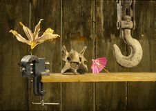 Free Hook, Skull, Umbrella And Dryed Flower Stock Photos - 19612113