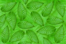 Free Green Leaves Stock Image - 19612351