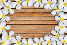 Free Plumeria Flower Frame Stock Photos - 19612503