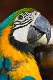 Free Blue And Yellow Macaw Stock Images - 19613474
