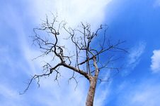 Free Dead Trees Stock Photography - 19614092