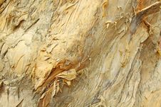 Free Tree Bark Details Stock Images - 19615084