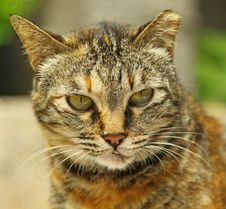 Free A Cat Portrait Royalty Free Stock Images - 19615269