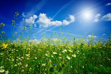 Free Silence Camomiles,sun And Blue Sky Royalty Free Stock Images - 19616299