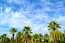 Free Beautiful Tropical Palms A The Blue Sky Royalty Free Stock Photos - 19617568