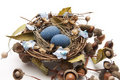 Free Bird Nest With Nest Of Eggs Royalty Free Stock Photos - 19624228