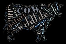 Wordcloud Of Cow Royalty Free Stock Images