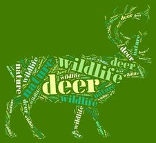 Free Wordcloud Of Deer Stock Images - 19621974