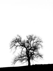 Free Tree Shape Royalty Free Stock Photography - 19622597