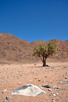 Free Sheperd S Tree In Richtersveld Stock Photography - 19623632