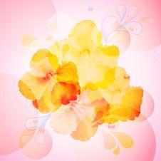 Free Hibiscus Flowers Background Stock Photos - 19623913