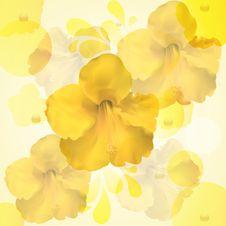 Free Yellow Hibiscus Flower Background Stock Photos - 19623923