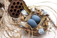 Free Bird Nest With Nest Of Eggs Stock Photos - 19624283