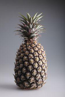 Free Pineapple Royalty Free Stock Image - 19626506