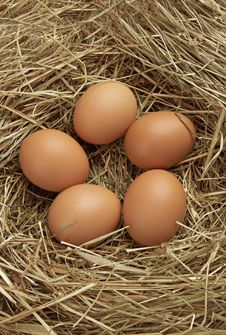 Free Five Eggs In Nest Royalty Free Stock Image - 19626756