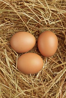 Free Three Eggs In Nest Royalty Free Stock Photo - 19627455