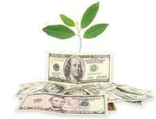 Money And Plant Isolated On White Background Stock Photography