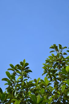 Free Green Leaf Blue Sky Stock Images - 19627834