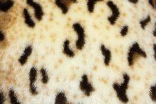 Free Leopard Skin Stock Photo - 19629730